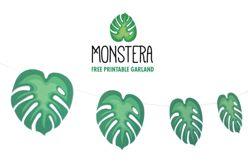 IMAGE COUV MONSTERA